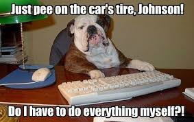 Bulldog typing on keyboard, just pee on the car's tire, Johnson, do I have to do everything myself